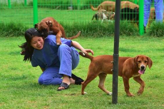 Ne pleurez plus votre chien, clonez-le !