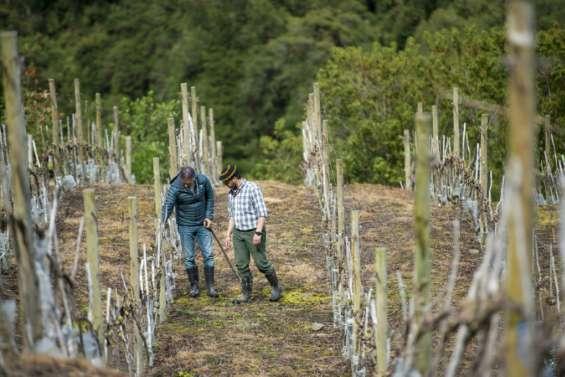 Réchauffement: même la Patagonie chilienne produit du vin