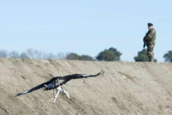 L'armée dresse des aigles pour chasser les drones indésirables