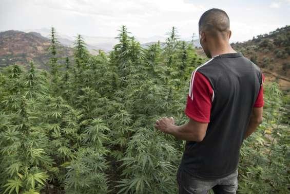 Au Maroc, le cannabis