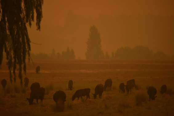 Tempête de sable et averse de grêle sur l'Australie sinistrée par les feux