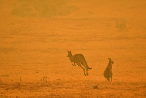 Enquête sur les feux en Australie : cela pourrait ne pas être un
