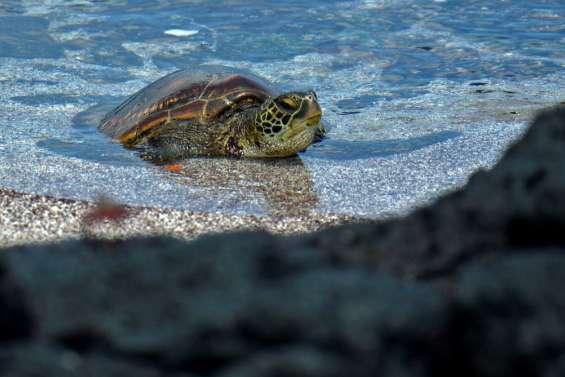 Pêche au requin et course à la tortue pour préserver les espèces des Galapagos