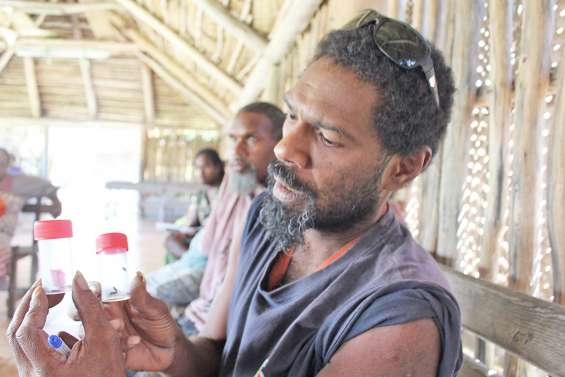 Le brontispa, tueur de cocotiers, se propage