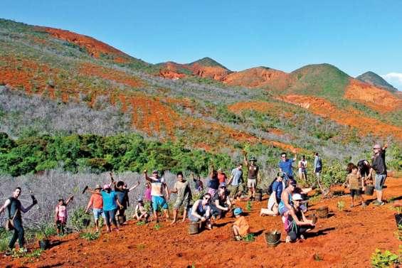 Caledoclean a planté 1 600 arbres à la rivière des Pirogues samedi