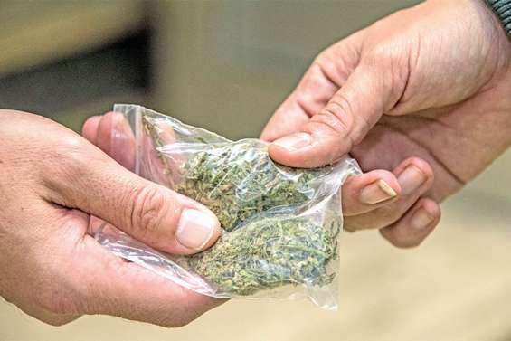 Petites mains et gros bonnets, les dessous d'un juteux trafic de cannabis