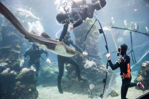 [VIDÉO] L'aquarium des Lagons se vide de ses requins