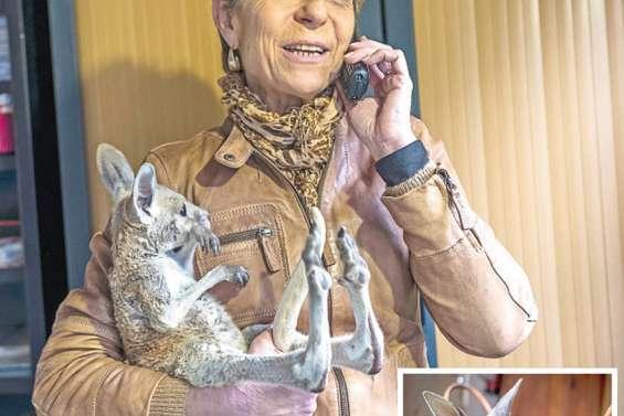 Des Français au secours  des marsupiaux orphelins