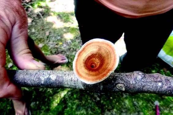 Découvrir les champignons au parc des Grandes Fougères