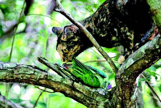 Les chats harets, un fléau pour la biodiversité
