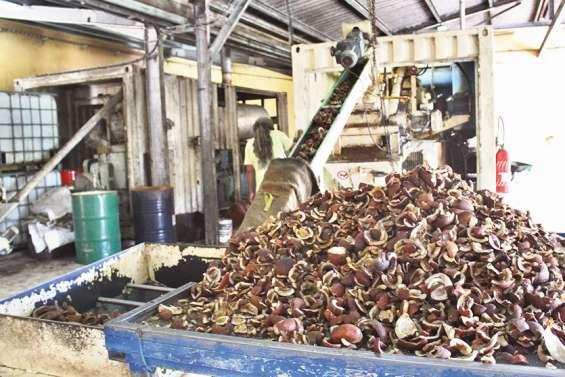 Comment secouer le cocotier pour relancer la filière coprah à Ouvéa