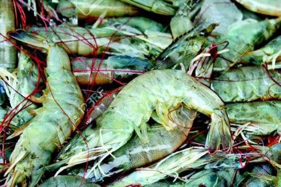 L'importation de crevettes crues bientôt interdite ?