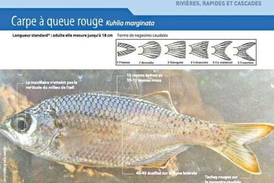 Identifier les poissons d'eau douce pour les protéger