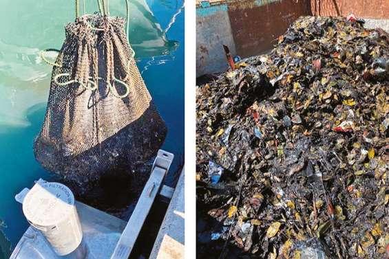 440 kilos de déchets collectés à Port-Moselle