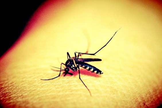 Dépistage de la dengue : une stratégie en deux temps