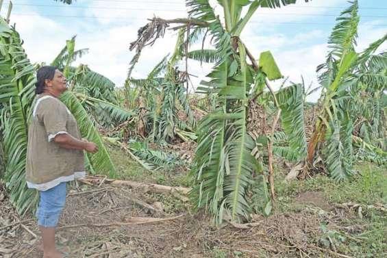 Les agriculteurs mis  à genoux par le cyclone