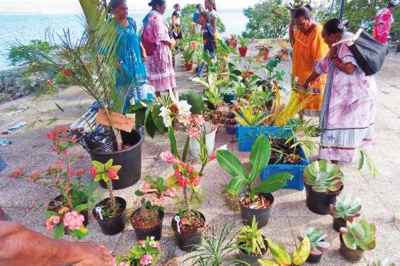 Une première édition de la journée des plantes sous le soleil