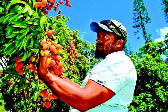 La vente de fruits et légumes à la sauvette fait débat