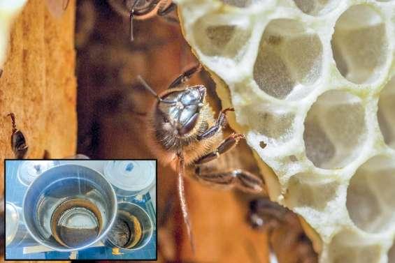 Les apiculteurs veulent sortir du « cauchemar »
