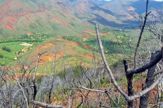 La forêt rend un service gratuit mais les incendies coûtent cher à tout le monde