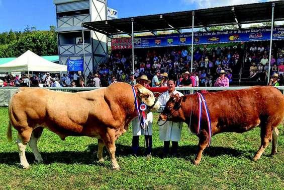 À cinq jours de la Foire, les éleveurs « bichonnent » leurs champions