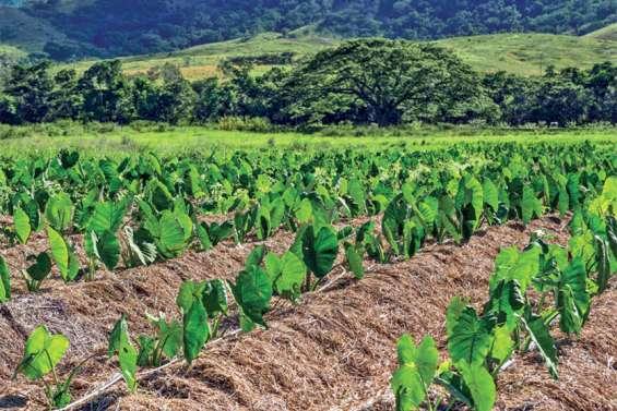 Un forum pour penser l'agriculture durable