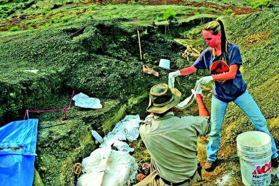 Découverte de fossiles du jour où un astéroïde a frappé la Terre