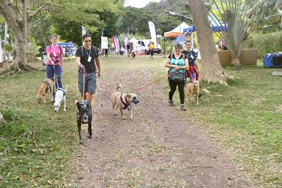 Les chiens, rois de la journée d'hier dans la vallée de Koé