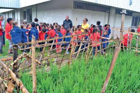 Les écoliers de Saint-Michel découvrent un havre de nature à La Rizière