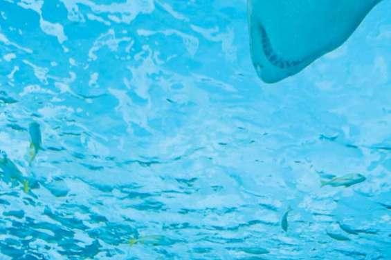 Un barrage anti-requin à Sorrento