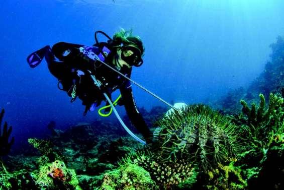 Envahis d'acanthasters, les récifs de Prony en sursis