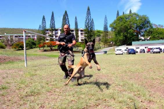 Wolf et l'adjudant Weiss, duo cynophile à la compagnie de gendarmerie de Nouméa