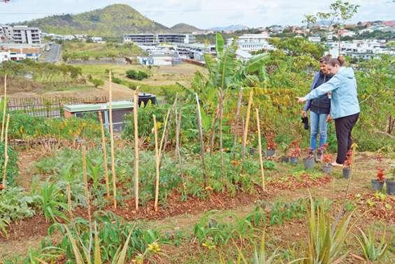 Aux jardins partagés, le travail de la terre au service du lien social