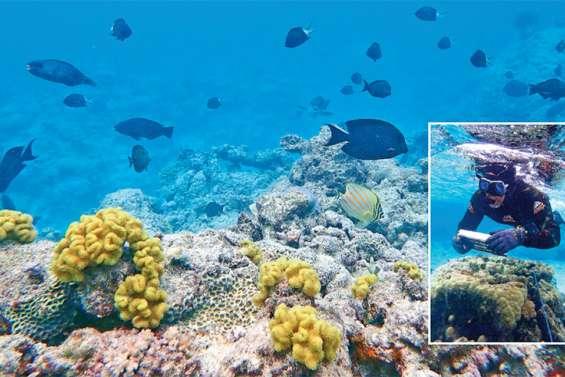 Les coraux du lagon d'Iaai sous bonne surveillance