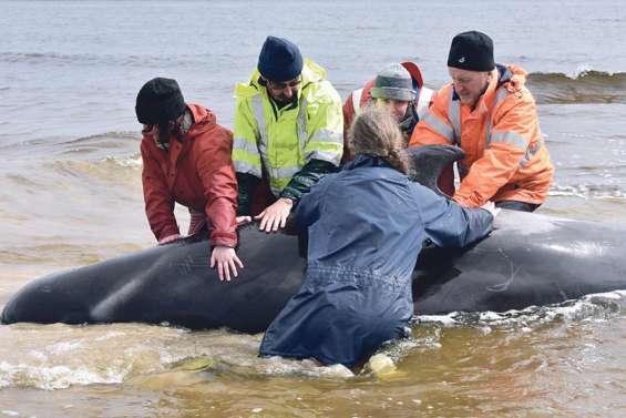 Près de 100 mammifères marins sauvés