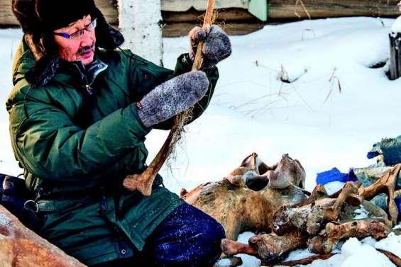 L'ivoire de mammouth, or blanc de Sibérie