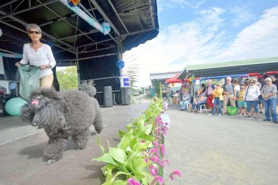 Huitanimaux adoptés et 800 visiteurs lors des portes ouvertes de la Spanc