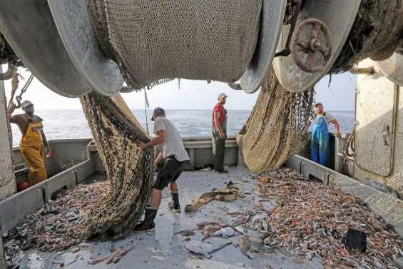 Pêche : «Moins de jours en mer, c'est la fin de notre métier»