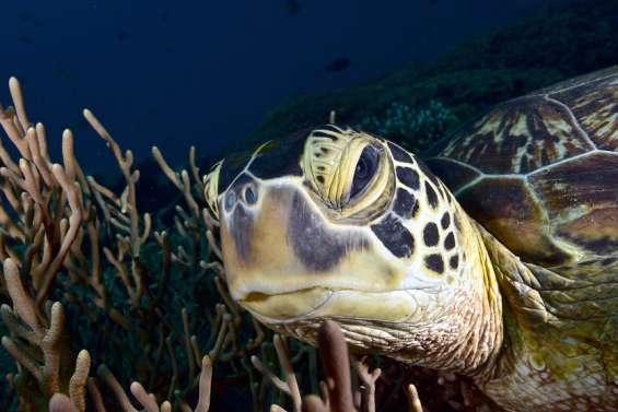 [VIDÉO] Comment prendre une (bonne) photo sous-marine?