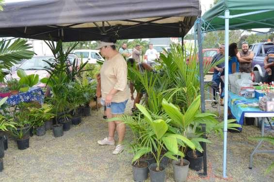 La neuvième Fête du palmier se prépare au marché de Moindou