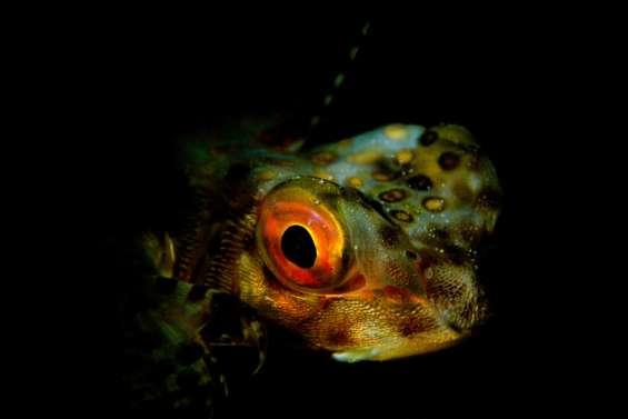 La photo d'Yves Gillet était le «Regard nocturne»