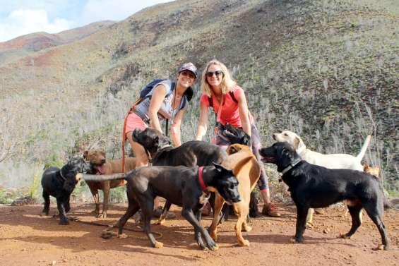 Elles organisent des randonnées pour nos amis les bêtes, sans maître ni laisse