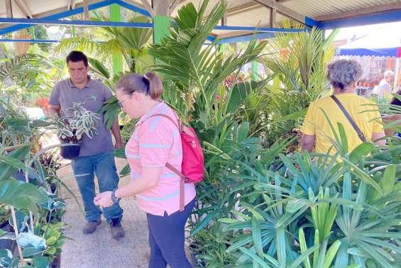Dumbéa : les plantes ont toujours autant la cote au parc Fayard