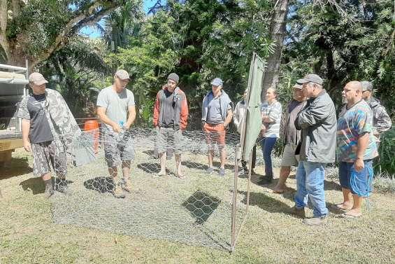Environnement : une formation à la capture de cerfs et cochons dispensée samedi à Sarraméa