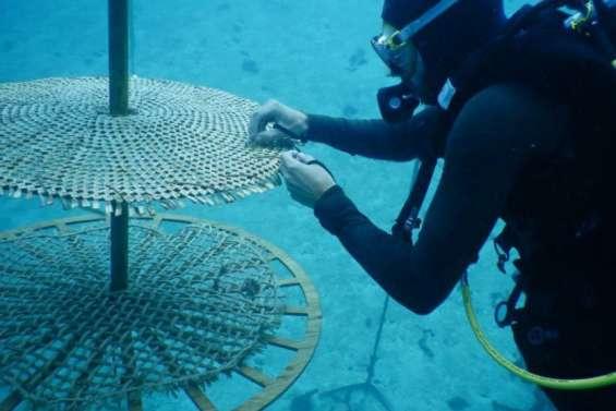 La Polynésie au congrès mondial de la nature de l'UICN