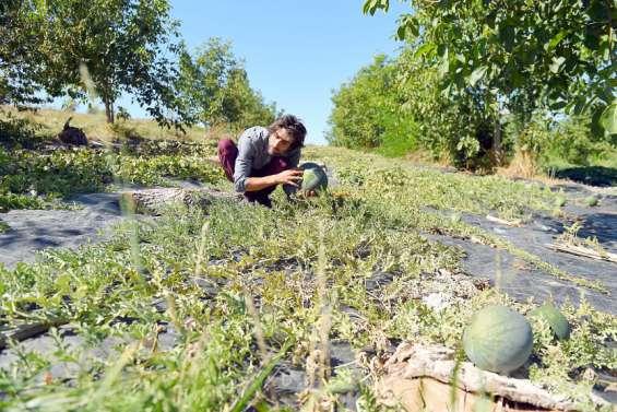 L'agriculture bio, en congrès mondial, affiche ses ambitions