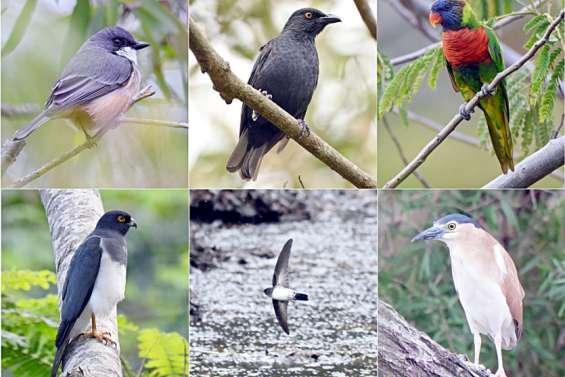 Dix oiseaux à observer depuis sa fenêtre, son jardin ou en balade à Nouméa