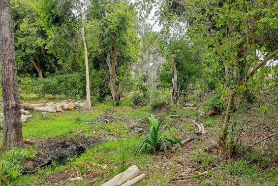 Le Conseil de l'eau a nettoyé le creek Fo-Moin