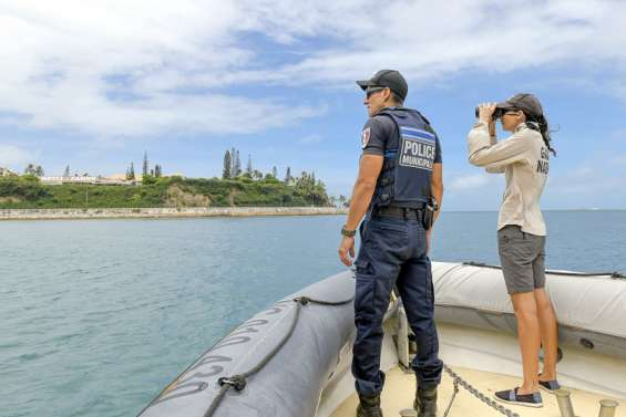 En province Sud, la pêche des requins-tigres et bouledogues bientôt autorisée