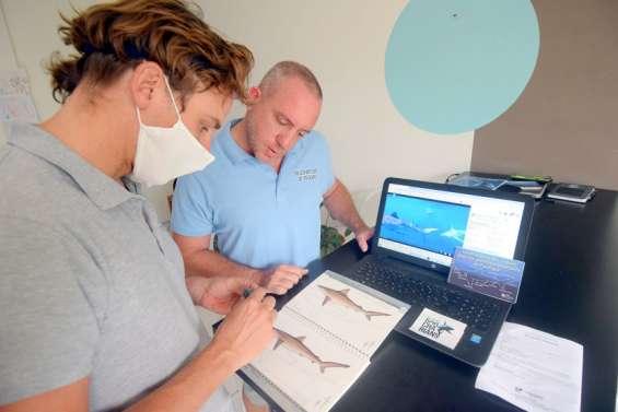 Karcharians: un projet pour mieux connaître les requins en Calédonie